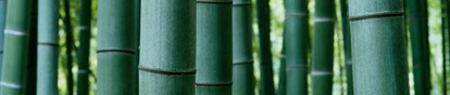 green_bamboo.jpg