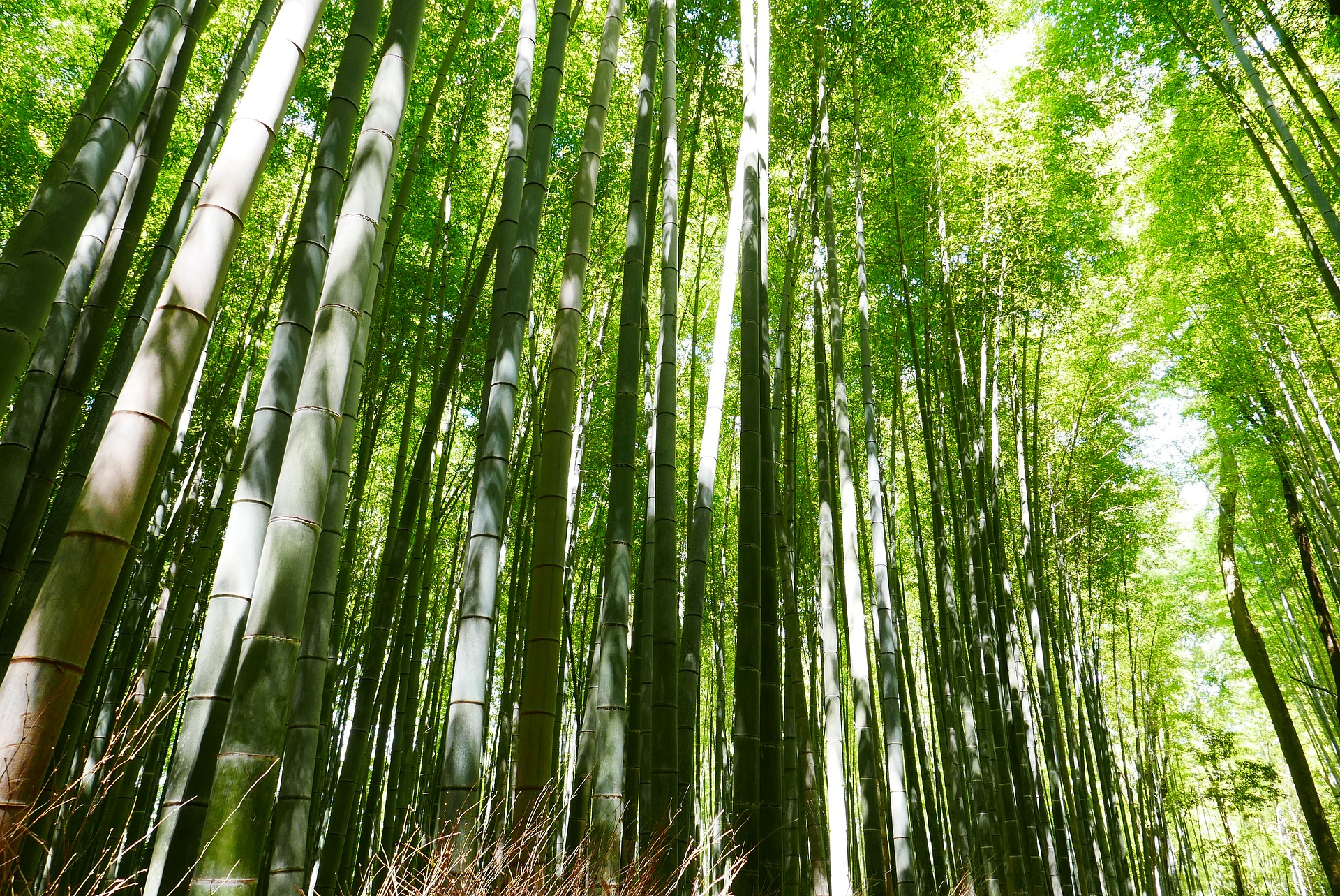 Bamboo is a sustainable building material