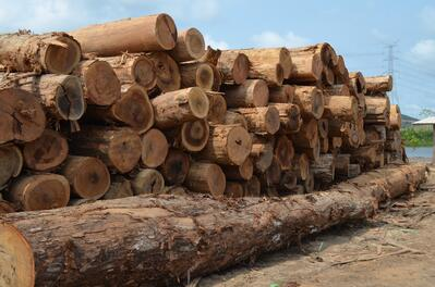 recently harvested logs are responsibly harvested
