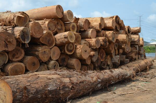 Lumber going through the proper channels for import to US