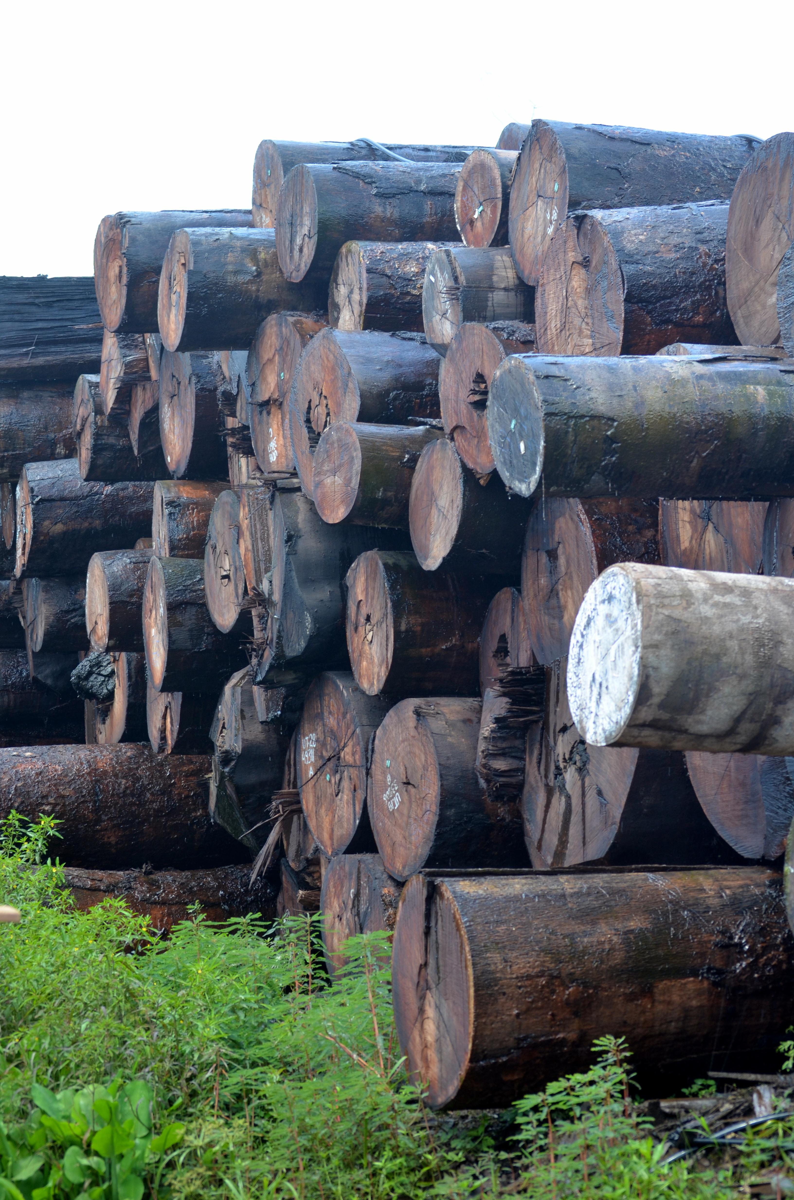 FSC_Certified_lumber.jpg